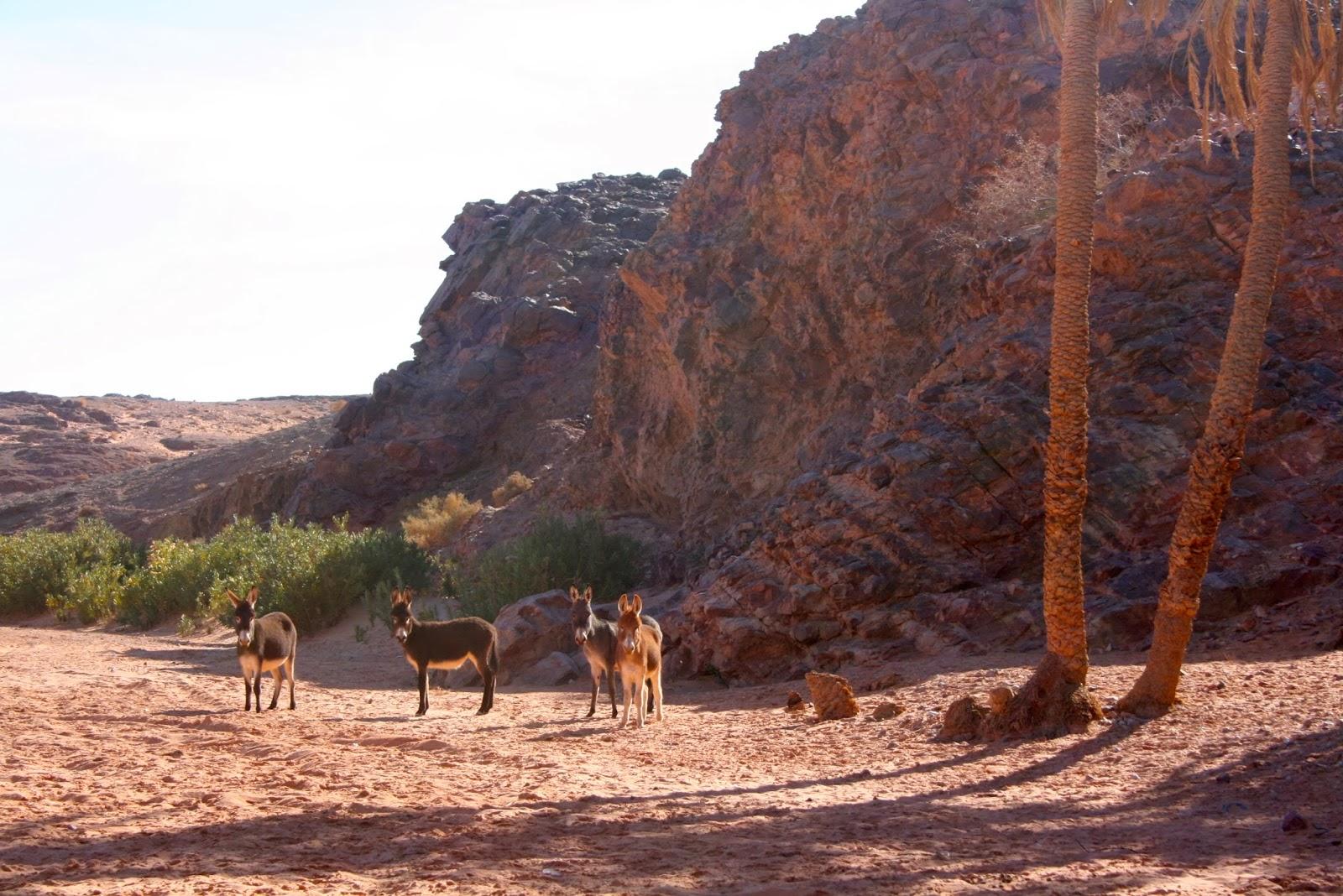 viajes al desierto, aventura, viajes a marruecos, marrakech, fez, arfoud, merzouga