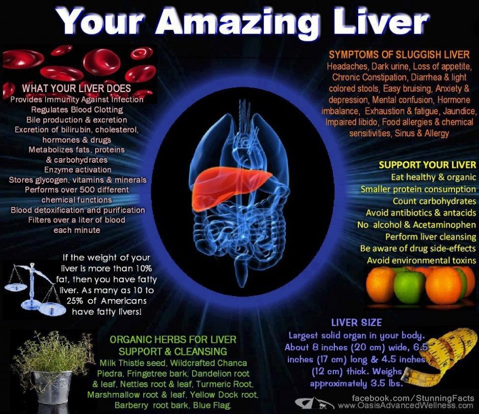 Facts About The Human Liver Most Interesting Files Collected