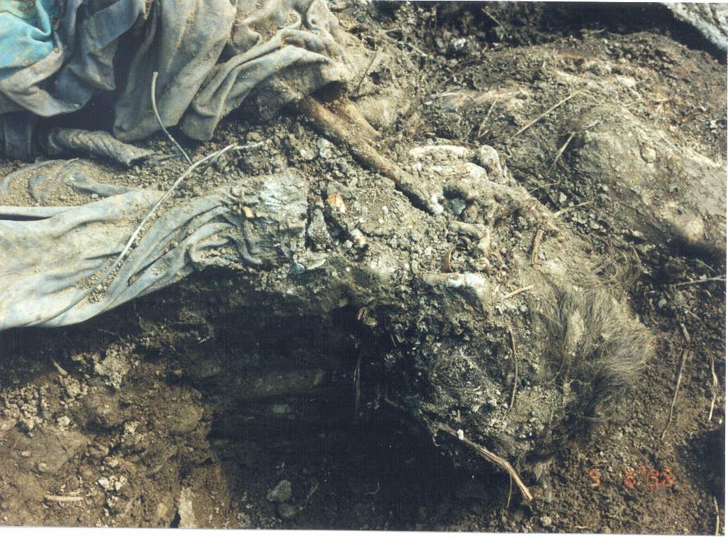 bosnian genocide Srebrenica massacre, slaying of more than 7,000 bosniak (bosnian muslim) boys  and men,  by the mass expulsion of bosniak civilians, amounted to genocide.