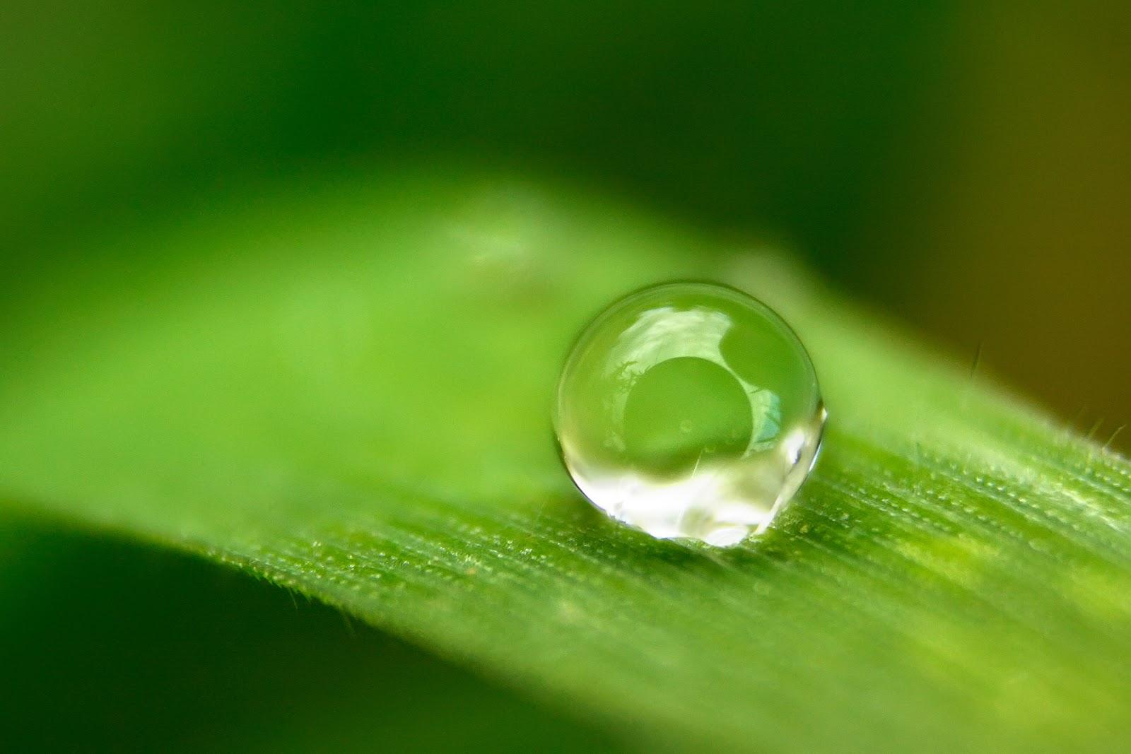 Yaprak Üzerinde Su Damlası