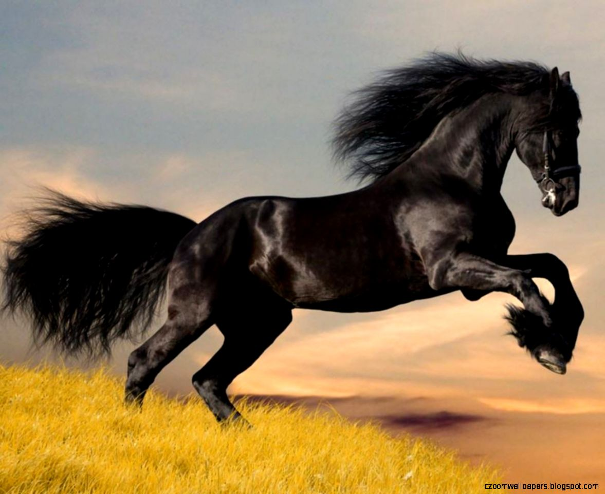 Arabian Horse HD Wallpapers  Horse Desktop Images  Cool Wallpapers