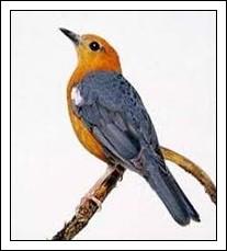 Faktor penyebab burung pandai berkicau
