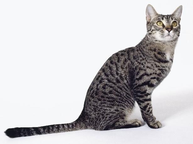 Razas De Gatos De Pelo Corto - 15 cortes de pelo para media melena que adorarás llevar