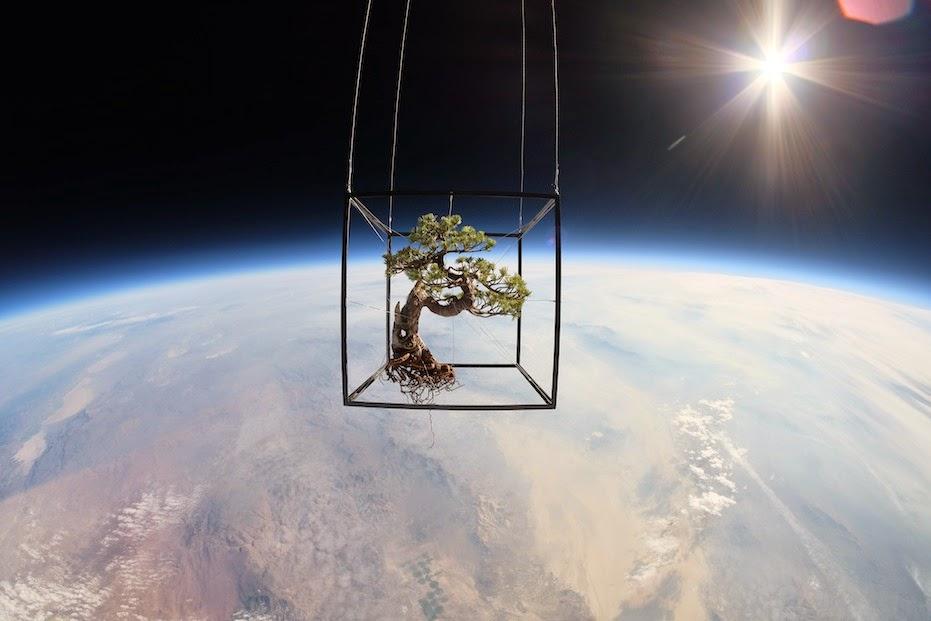 EXOBIOTANICA BOTANICAL SPACE FLIGHT