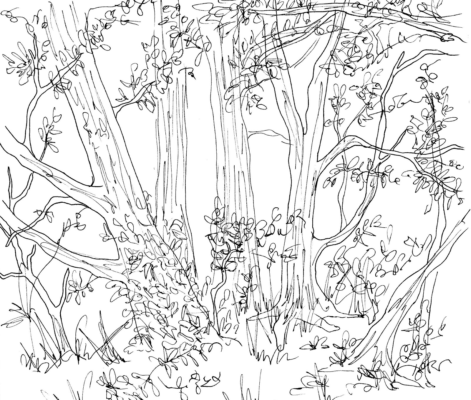 Line Art Forest : How to draw a forest sketch