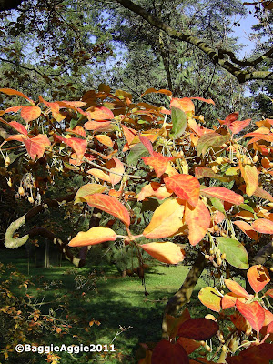 Westonbirt Arboretum, November 2011, copyright BaggieAggie.