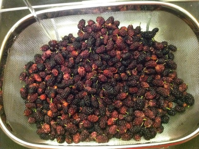 mulberries in strainer