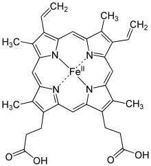 struktur hemoglobin