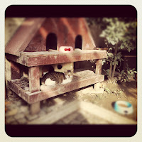 Two-Toned Stray Cat in a Cat House