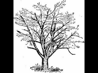 Maksud Menggambar Pohon Pada Psikotest