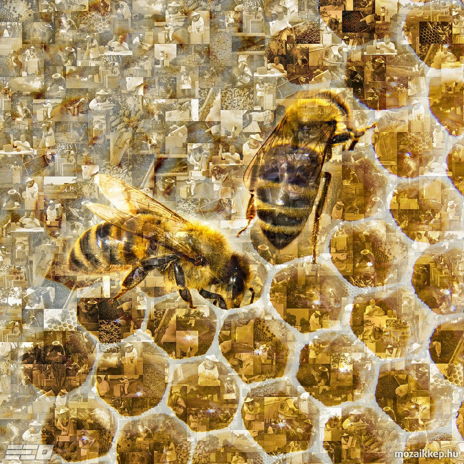 Hajdú Ervin Ottó - Méhecskés mozaik