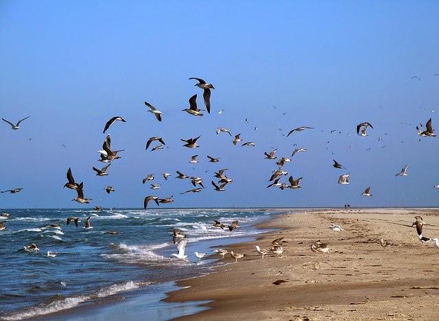 Gaviotas en aire, arena y mar