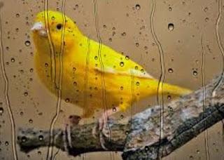 5 Trik Jitu Perawatan Burung Saat Musim Hujan Tiba