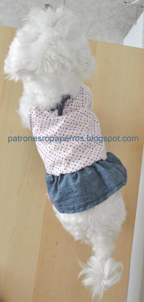 vestido de perro
