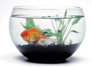 Biologia ecosistema for Easiest fish to care for in a bowl