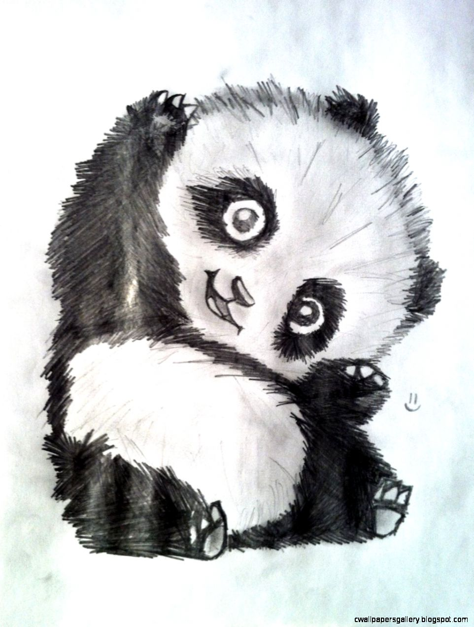 Panda Drawings  Best Animals Galleries