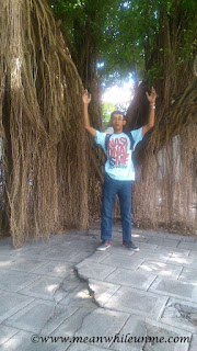Keraton Surakarta Hadiningrat pohon beringin