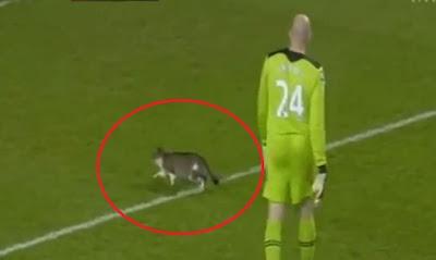 gato en la cancha de futbol en inglaterra detiene partido