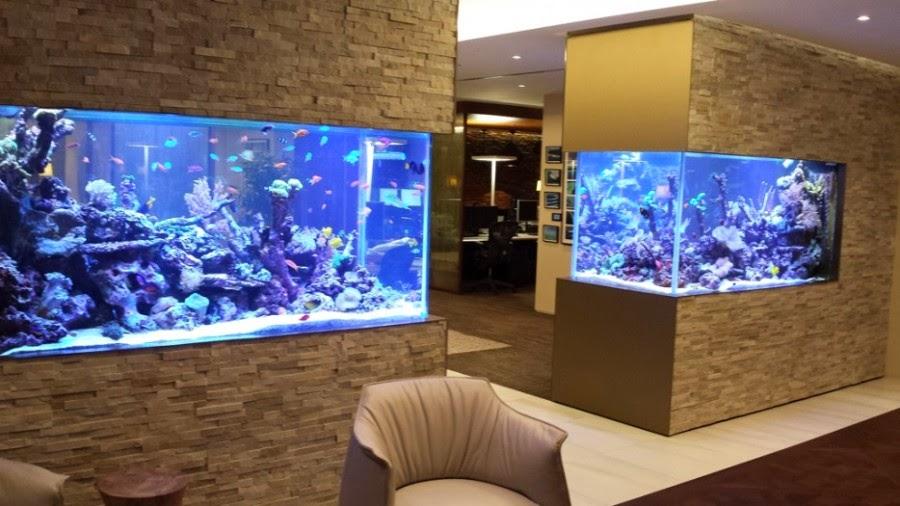 Unpodiblog 30 modi di mettere un acquario in casa p1 - Acquario in casa ...