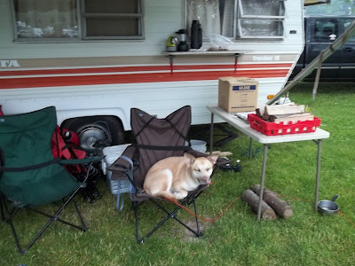 Camping with Layla the dog, happy in her camp chair