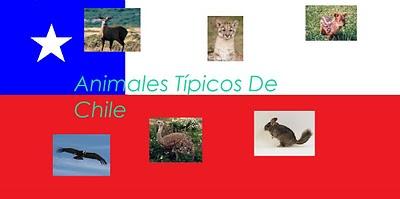 Mi vecino totoro y la t a cecy flora y fauna de chile for Cactaceas de chile