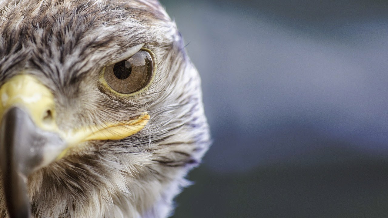 Birdman: todos tenemos un pájaro que nos habla ( y no siempre tiene la razón)