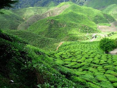Al Quran sebagai sumber inspirasi pertanian