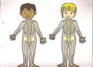 Dibujos para todo Dibujos del cuerpo humano a color