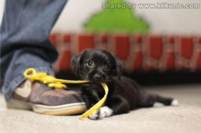 http://3.bp.blogspot.com/-pep--jG_t90/TXhNiqUCo4I/AAAAAAAAQiw/ctKtvZqbGLM/s1600/these_funny_animals_635_640_02.jpg