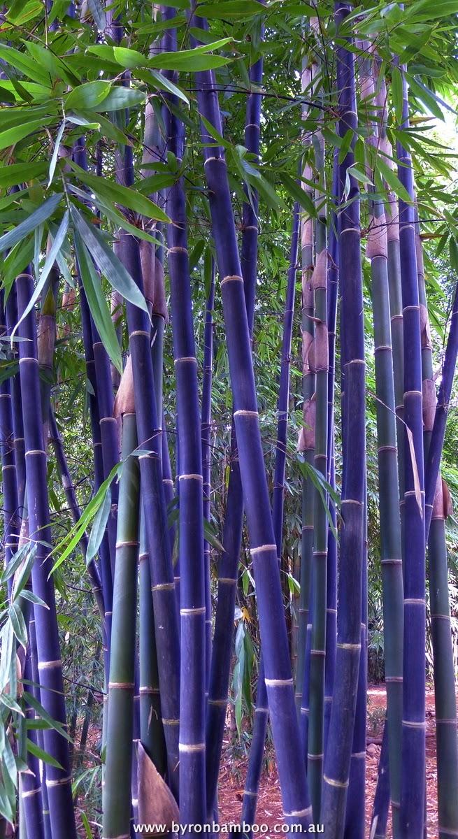 Kerajinan Tangan yang Mudah - Contoh Kerajinan Tangan Dari Bambu