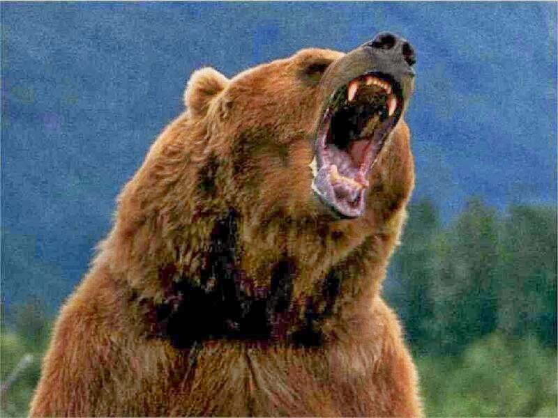 Image 1 Oso El Grizzly Un Primo Hermano Del Pardo Puede Llegar A ...