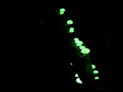 Setas luminiscentes