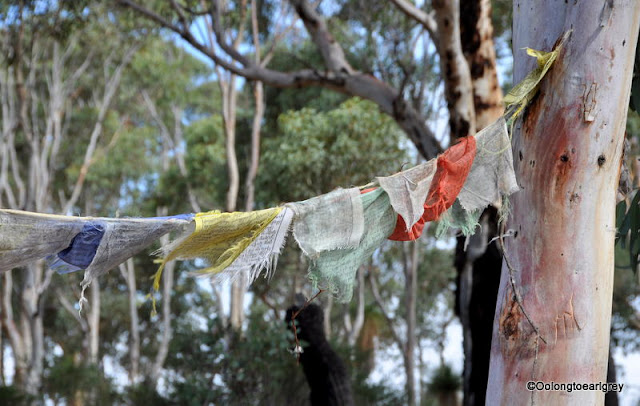 Bush and Prayer flags