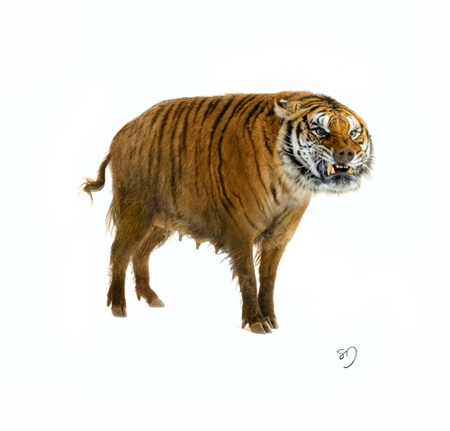 12-Tiger-Wild-Bore-Sarah-DeRemer-You-Are-what-You-Eat-Photo-Manipulation-www-designstack-co
