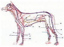 Acupuncture on animals.