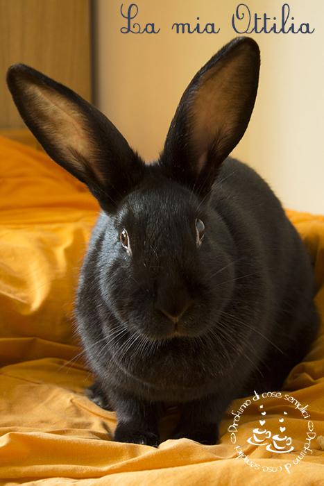 vi presento ottilia..la mia coniglietta!!!