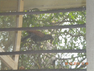 window with coucal