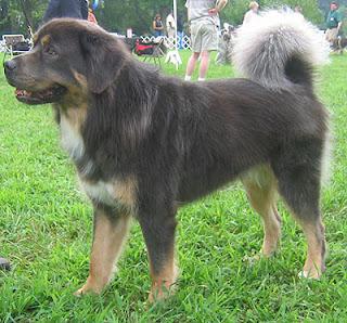 Breeds Dog: February 2012