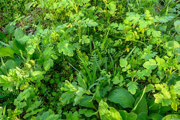 Les incroyables comestibles saint michel sur orge et les engrais verts - Quelles sont les plantes que l on peut bouturer ...