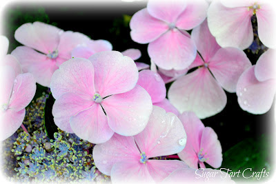 edited hydrangea flowers photo