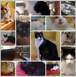 Toca-dos-Gatos
