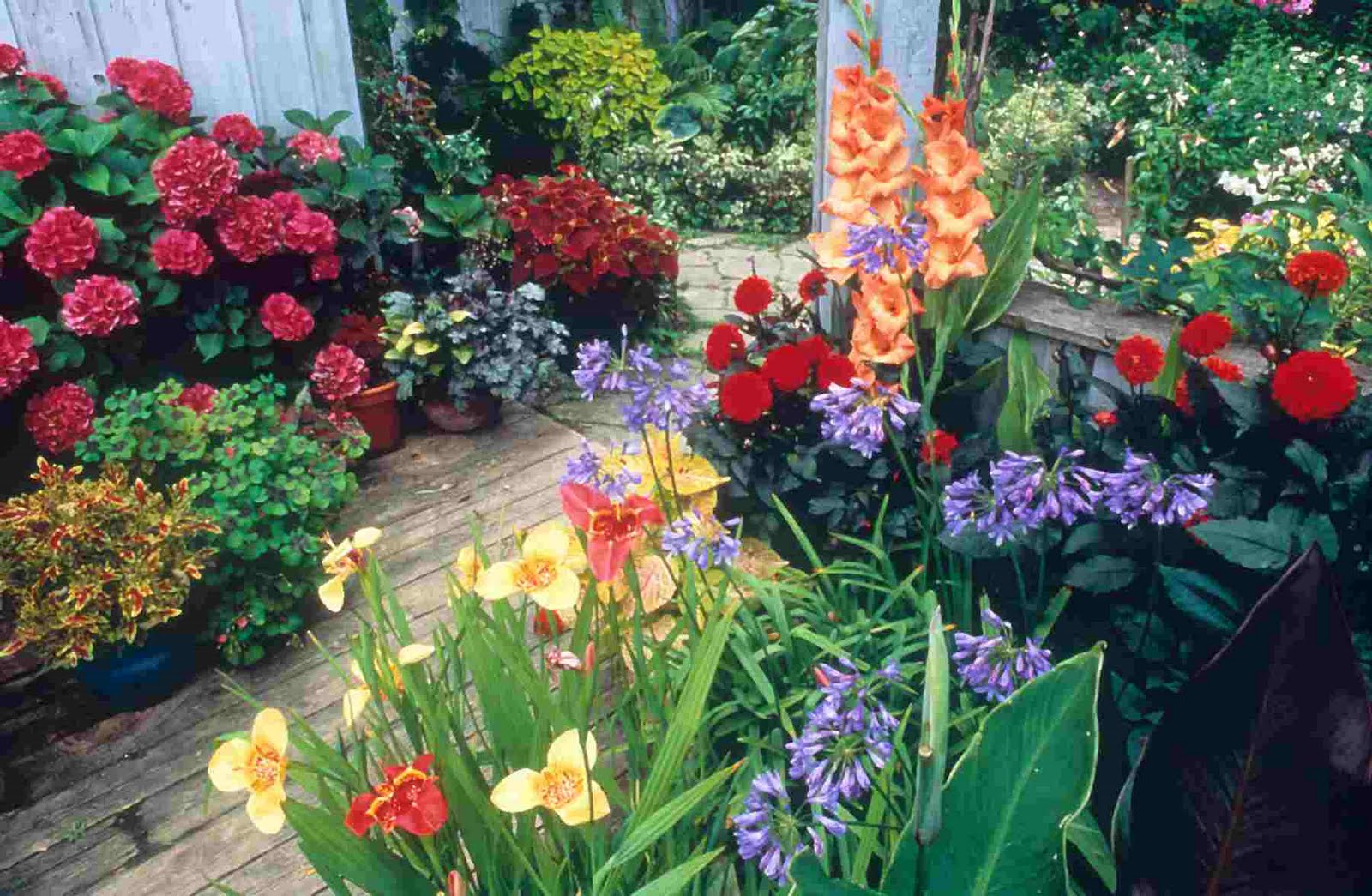 Plants for tropical gardens for Flower landscape