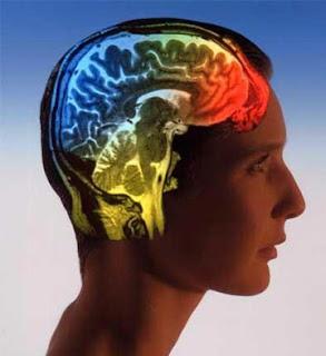 Αντίληψη - Η στροφή των νευροεπιστημών στη γνωστική λειτουργία. Νευροεπιστήμη - Εγκέφαλος.
