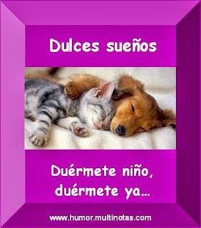 Imagenes Graciosas de Animales, Perro y Gato Durmiendo