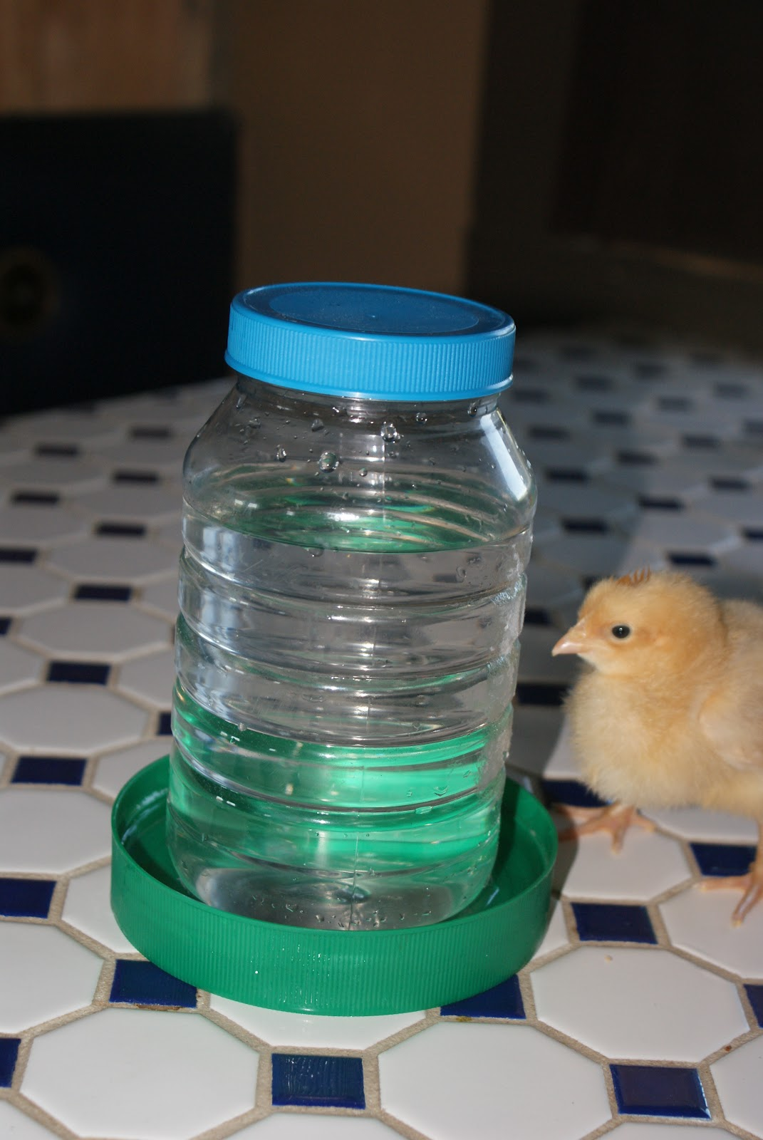 Off The Grid At 30 Frugal Tuesday A Quick Diy Chick Feeder Waterer