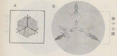 『雪華図説』の研究 模写図と顕微鏡写真と比較 第十七図