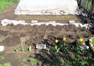 Ямки для посадки рассады на грядке выкопаны