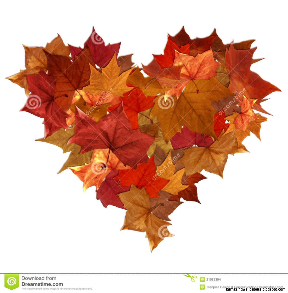 Autumn Leaves Isolated Heart Stock Images   Image 21083304