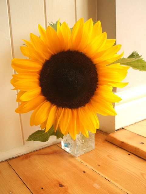 sunny sunflowers from our allotment plot