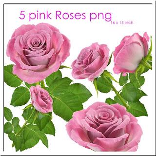 rosas rosadas png